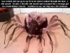 doggie_spider