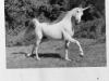 Missing_Unicorn
