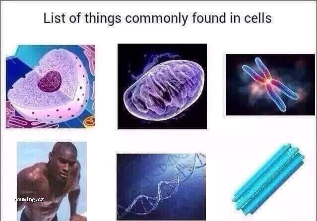 found_in_cells