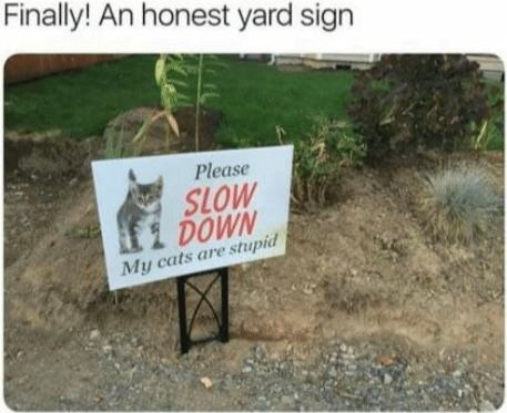 Idiot_cats_live_here