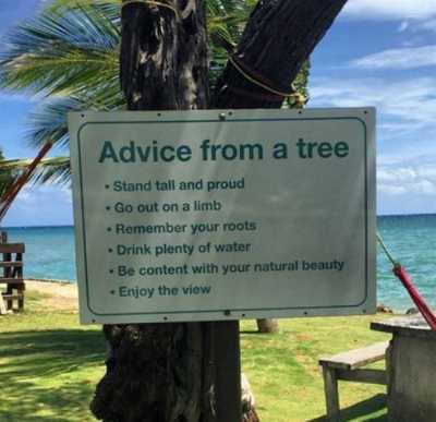 POHAdvice_From_A_Tree
