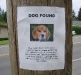 dog_found