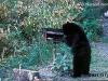 Bear_Grylls