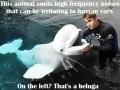 This_Animal3549