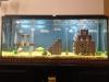 mario_aquarium