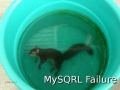 sqrl_failure