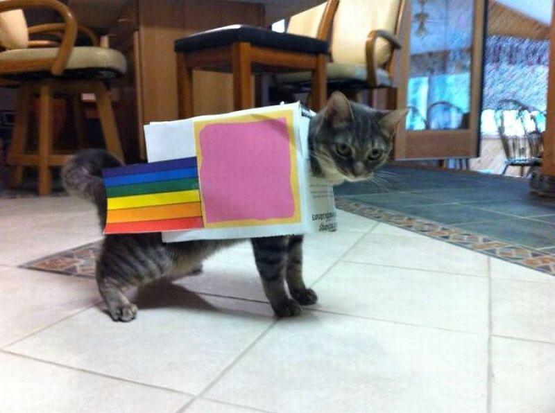 X-_Nyan_Cat_Costume