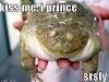 prince_frog