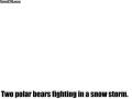 polar_bear_vs_polar_bear