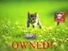 miina_owned
