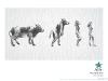 evoluce_kravy