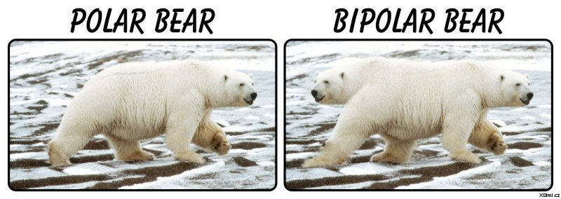 danq-bipolarbear