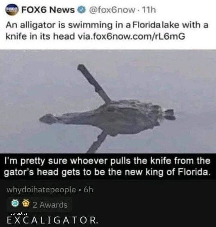 Gator-the-great-excaligator