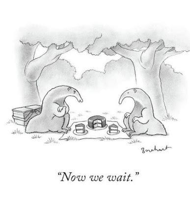 anteater_picnic