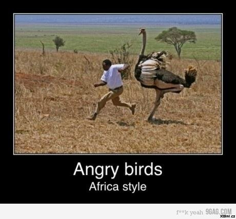 angry_birds_are_angry