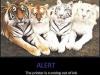 Alert_15-01-2012