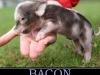 Bacon_19-01-2012
