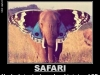 Why_Safari_And_LSD_Dont_Mix_27-02-2012