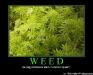 633495994114478186-weed
