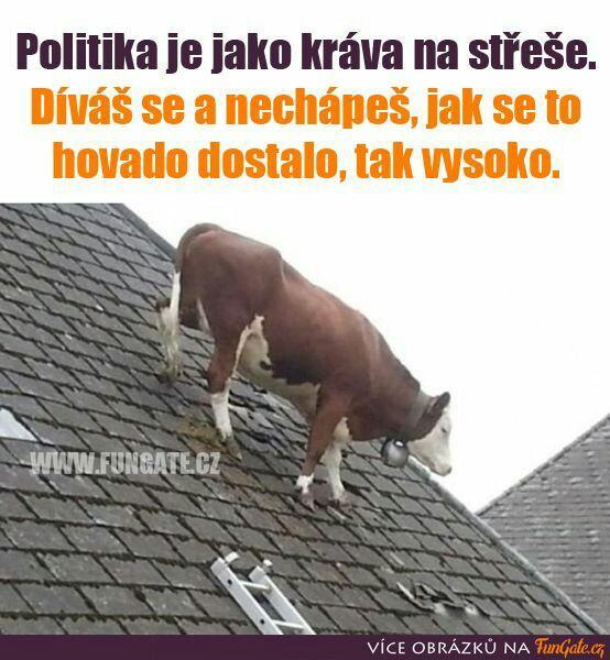 politika_jako_krava