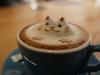 morning_meow