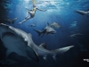 Swim_safely_-_Tampax_ad_04-02-2012