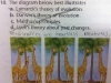 giraffes_theory