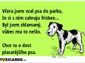 vcera-jsem-vzal-psa-do-parku-ze-si-s-nim-zahraju-frisbee-byl-jsem-zklamany-vubec-mu-to-neslo-chce-to-o-dost-placatejsiho-psa-966