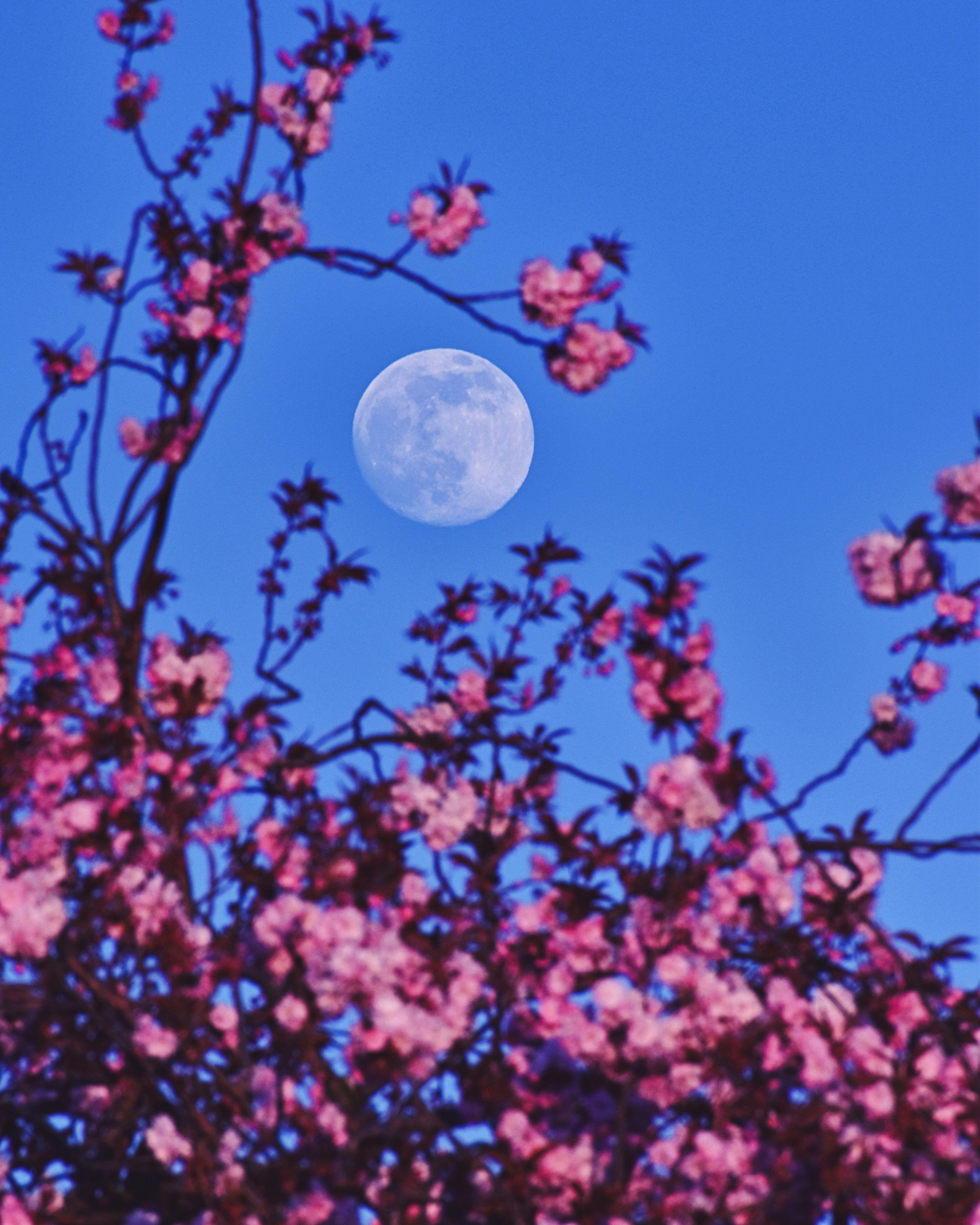 pink_moon