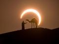 EclipseCamel_Cripps_2560