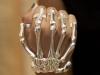 skeletal_bracelet