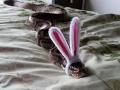 bunny_snake