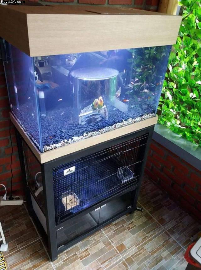 linnut_akvaariossa