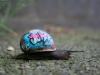 john_the_bastard_snail