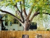 tree_illusion